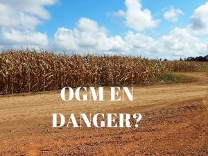 OGM : politiser la recherche nous fait dangereusement régresser