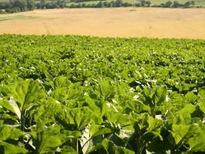 Agriculture : nouveau modèle économique.